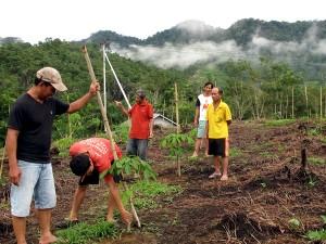 Sejumlah warga Desa Tanjung sedang menyaksikan hasil okulasi karet unggul di kebun percontohan yang terletak di Dusun Roban, Desa Tanjung. Foto: Andi Fachrizal