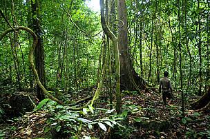 Langkah penting bagi pembangunan desa penyangga kawasan ekosistem Muller