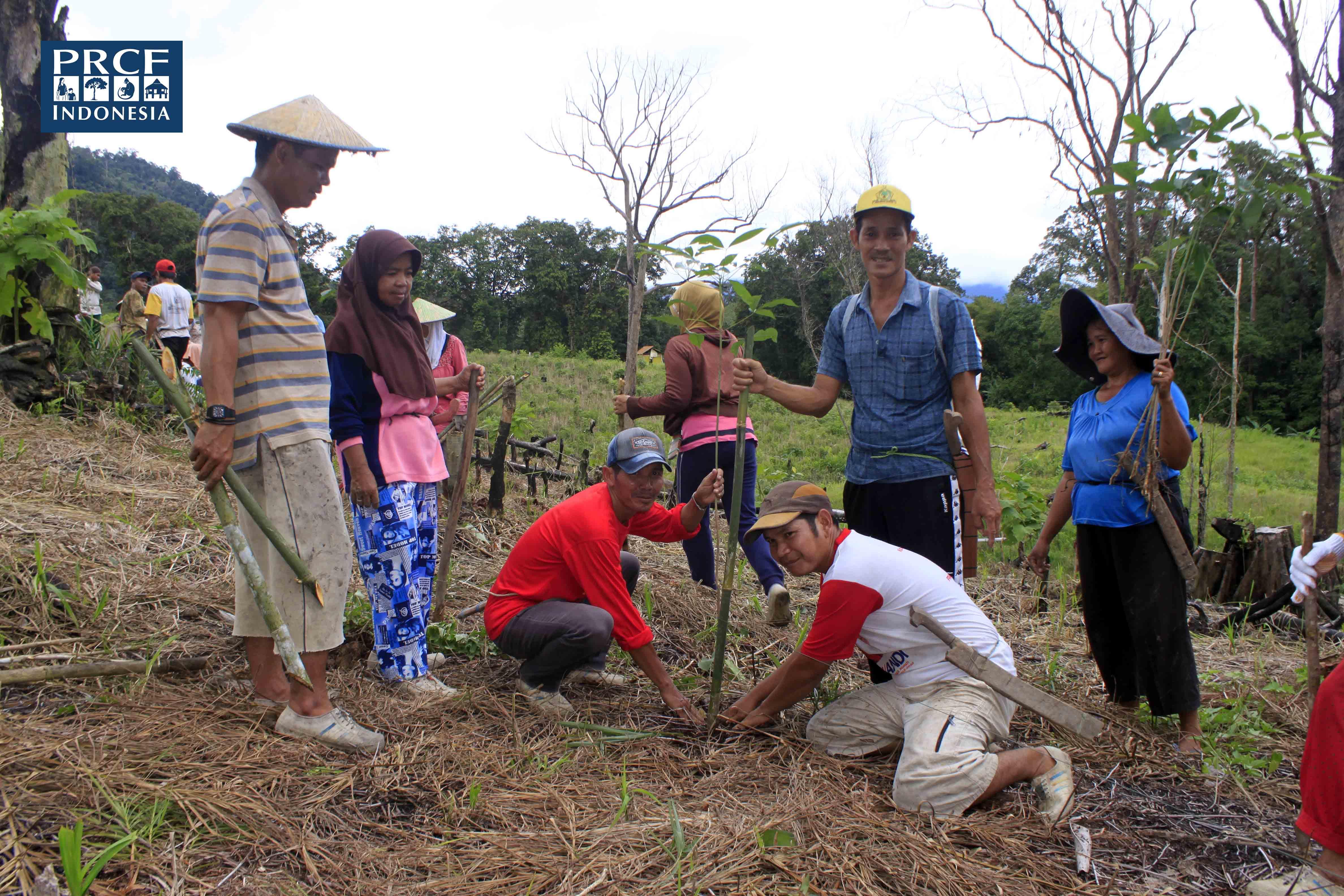 Penghijauan di Desa Nanga Yen, Kapuas Hulu