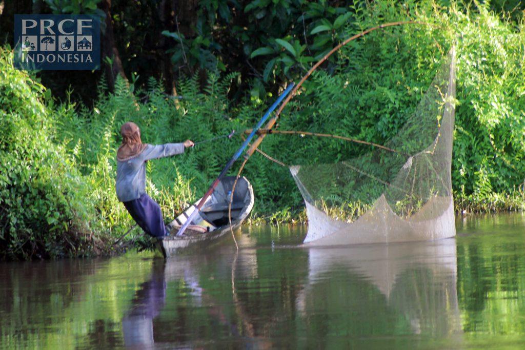 salah satu alat tangkap ikan di Danau Sentarum, hasilnya biasa digunakan untuk pakan ikan toman.