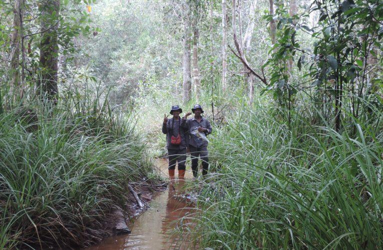 Kawasan Hutan dan Lingkungan Hidup