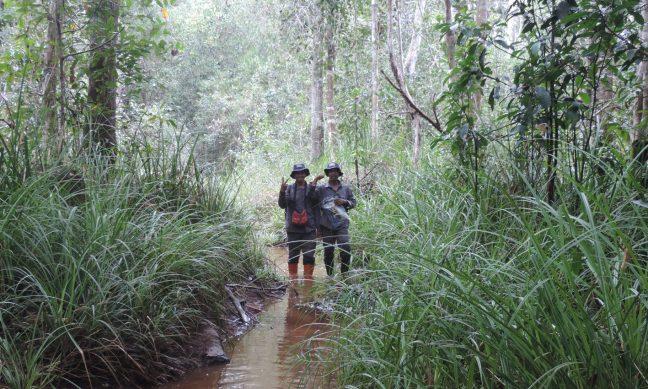 Kawasan hutan dan lingkungan hidup yang dikelola oleh LPHD Lauk Bersatu