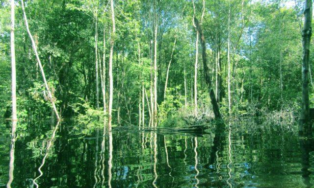 Hutan untuk Masa Depan di Nanga Lauk
