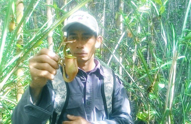 Saat Patroli Hutan Ketemu Banyak Kantong Semar