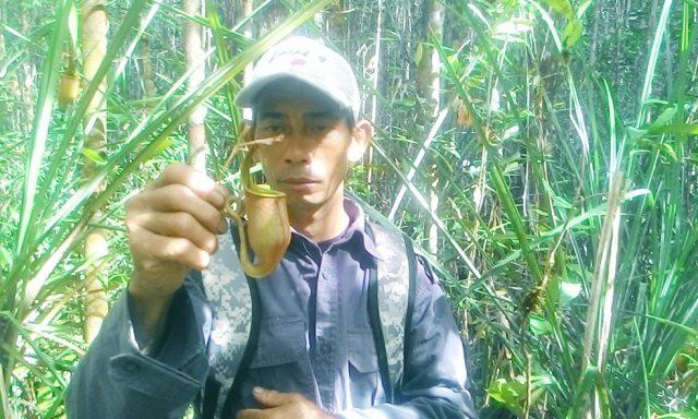 Kantong semar ditemukan di hutan desa Nanga Lauk
