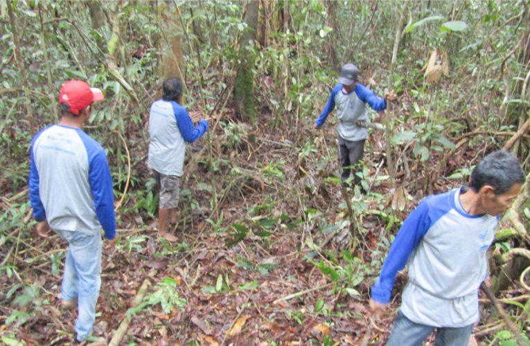 PRCF Siapkan Program Agroforestry akan Tanam 8 Ribu Pohon per Tahun