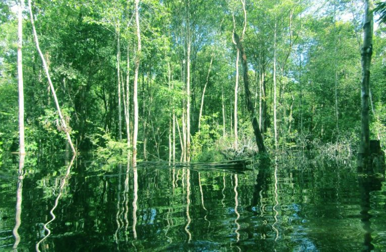 Hutan Untuk Kehidupan Manusia