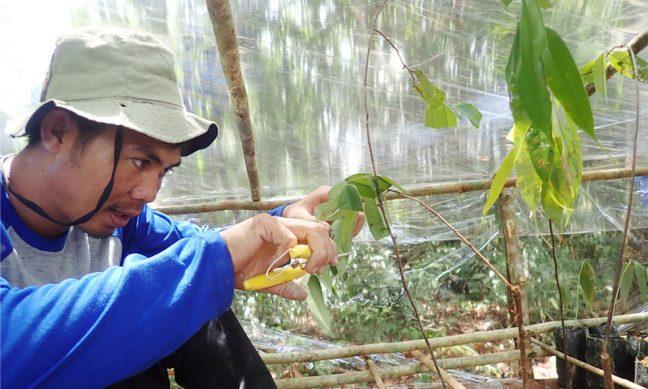 Peserta pelatihan agrofrestry sedang menyemaikan bibit pohon kayu