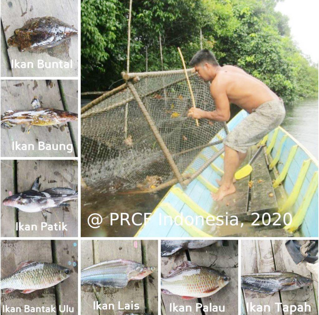 Jenis-jenis ikan yang banyak ditemukan di perairan Nanga Lauk