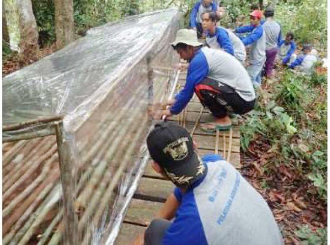 Praktik Agroforestri di Hutan Desa Nanga Lauk