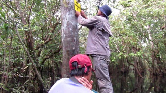Tanda batas hutan desa sedang dipasang tim patroli hutan LPHD Lauk Bersatu
