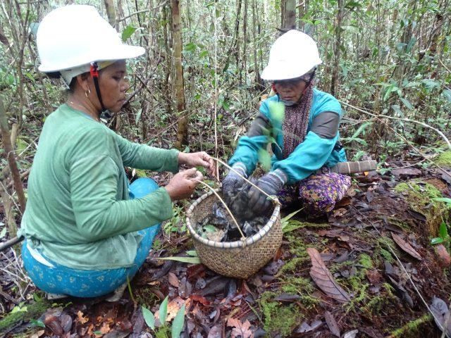 Keterlibatan perempuan dalam penanaman bibit pohon pakan lebah