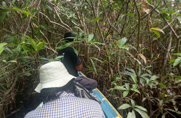 Wisata Panen Madu Mulai Digagas di Nanga Lauk