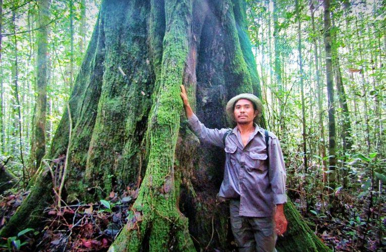 Patroli Hutan di HPT Ketemu Pohon Raksasa