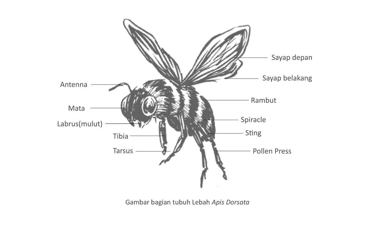 Lebah hutan Tesso Nelo