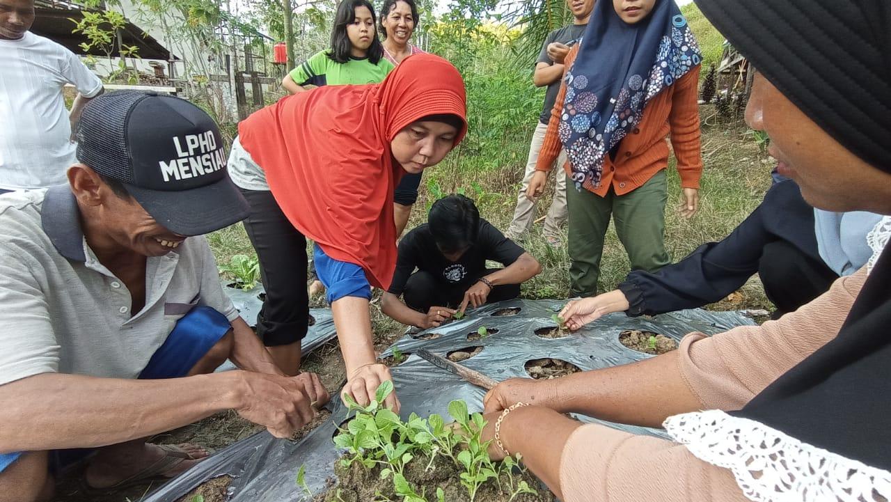 Perwakilan perempuan dari Desa Nanga Lauk sedang belajar menanam sayur