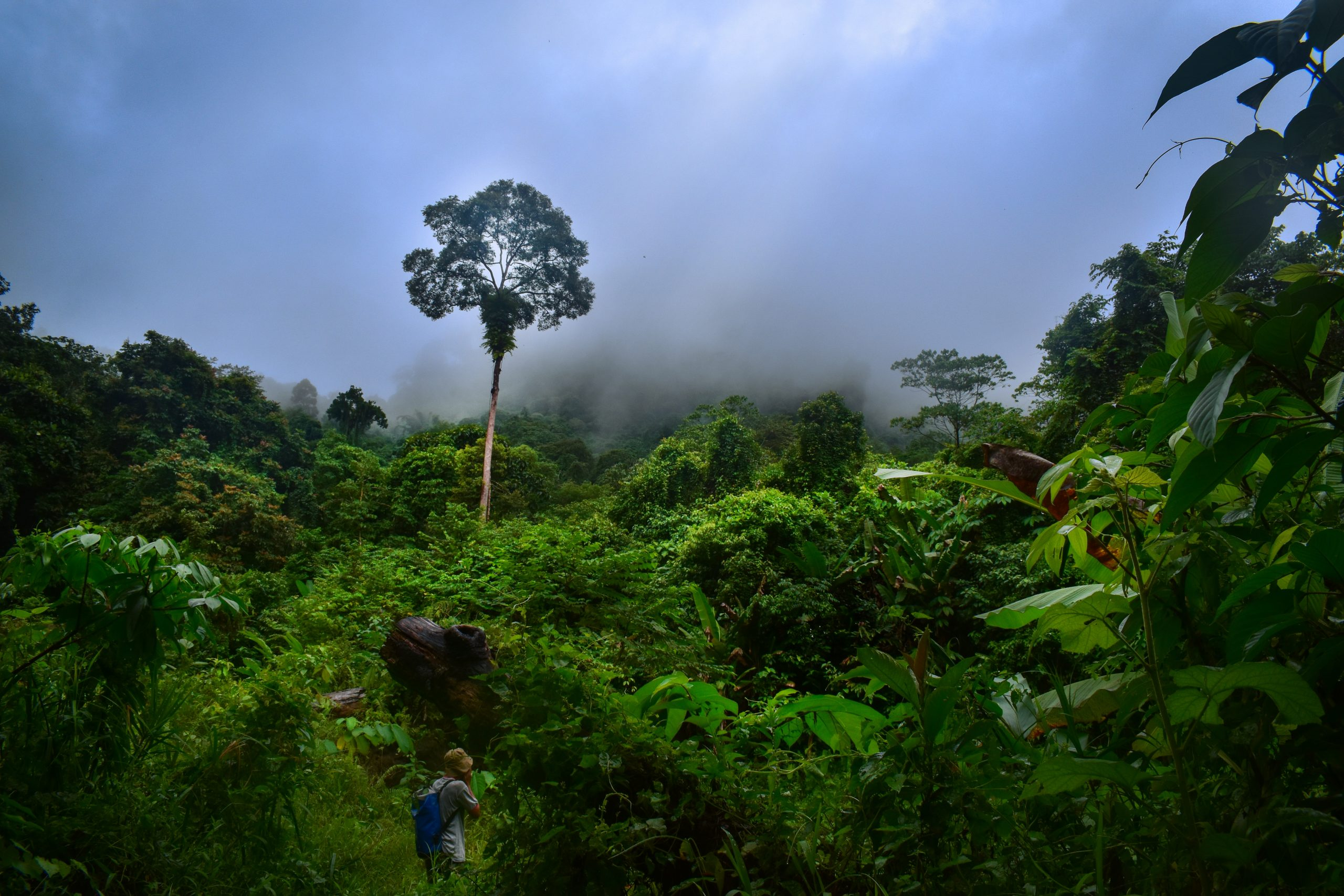 Jenis-jenis kayu di Kalimantan Barat