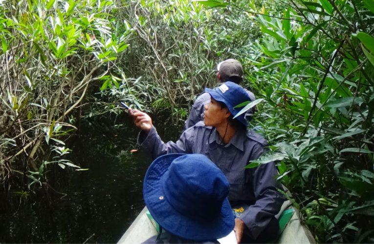 Tiga Jenis Patroli untuk Menjaga Kawasan Hutan di Nanga Lauk