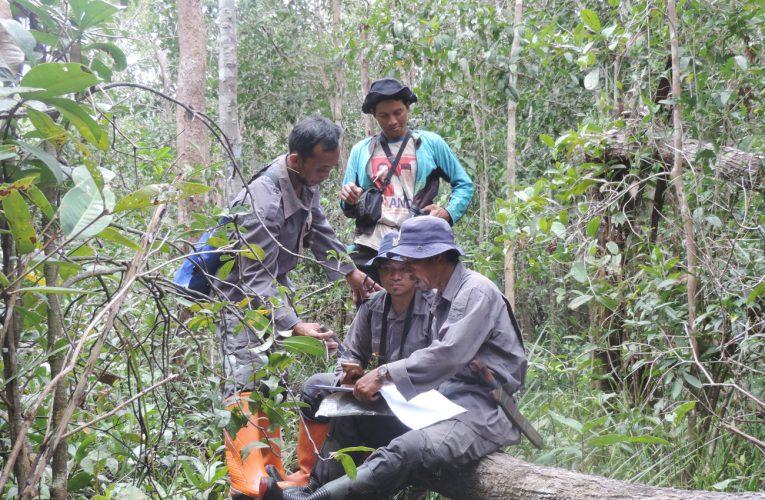 Patroli Hutan Produksi Terbatas, Memastikan Tidak Ada Kerusakan Hutan