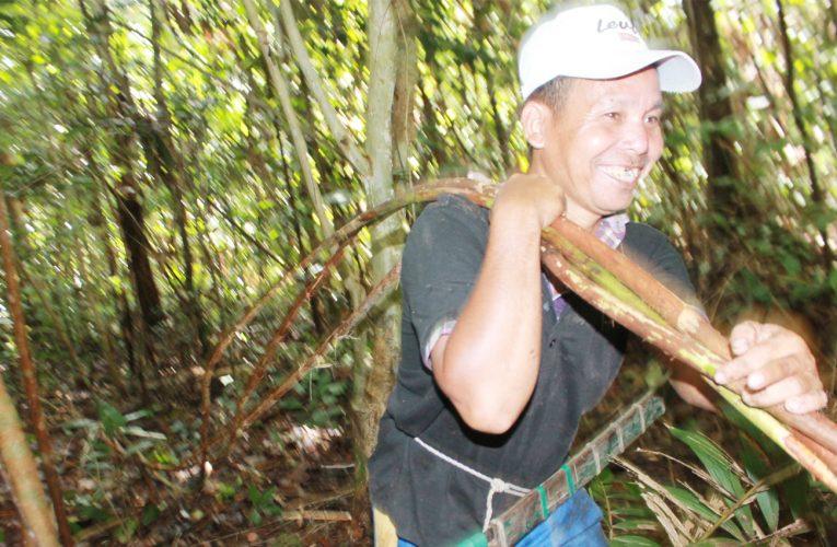 Perhutanan Sosial, Mengenal Pengertian Hasil Hutan