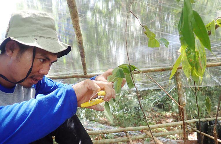 Lima Jenis Pohon Kayu yang Akan Digunakan Untuk Merehabilitasi Lahan Rusak