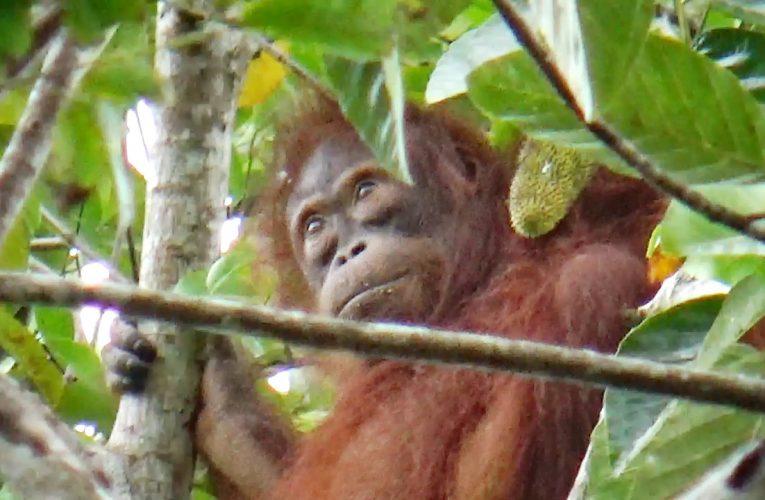 Ekowisata Nanga Lauk Butuh Waktu
