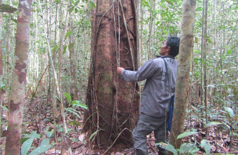 Mengenal Hutan Konservasi di Indonesia