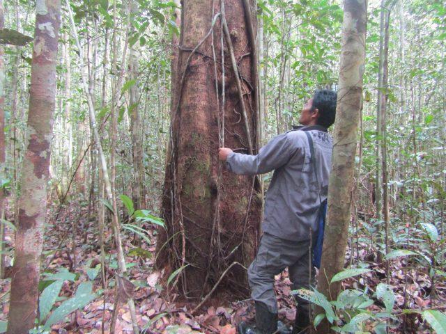 Hutan konservasi yang tersisa di desa Nanga Lauk