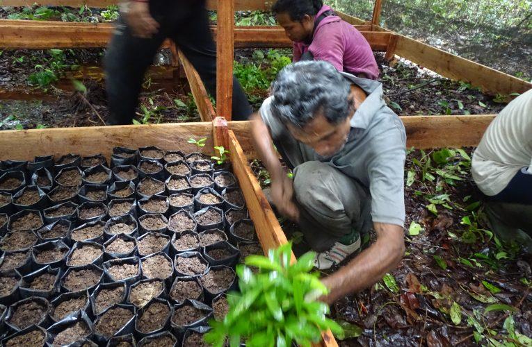 Penanaman Bibit Pohon Kembali Dilakukan